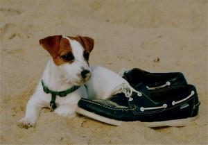 Jasper on the Beach