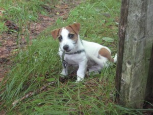 Jasper in the grass